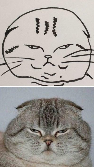 Dibujos realistas gato - molesto