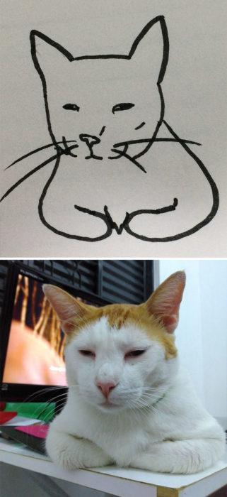 Dibujos realistas gato - descansando