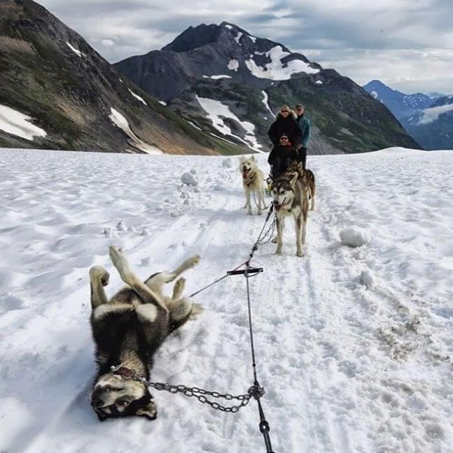Perro husky jugando en la nieve
