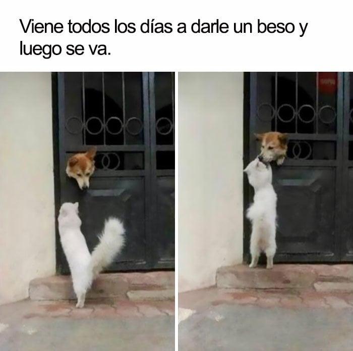 Perro y gato beso