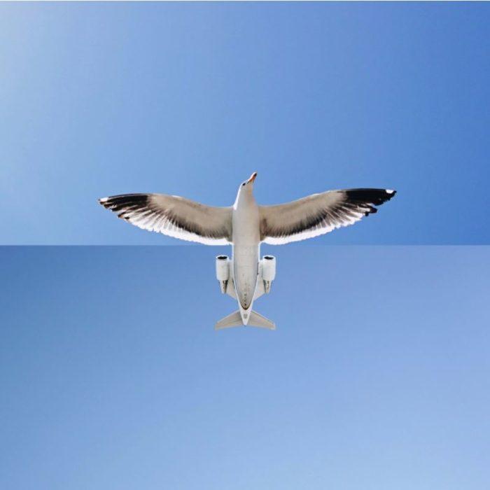 Fotomontajes - gaviota o avión