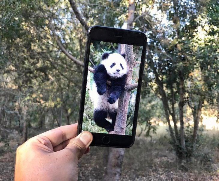 Panda en árbol