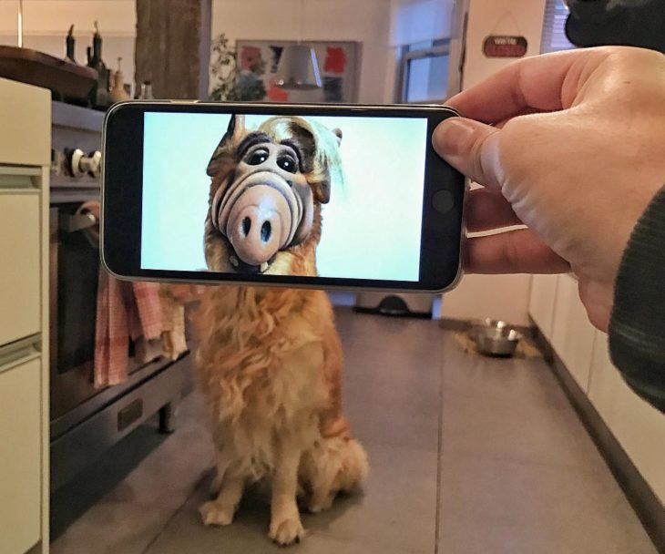 alf perro