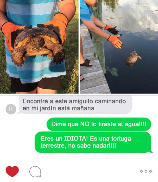 Gente tonta - tortuga terrestre