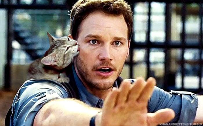 gatito besando a chris pratt