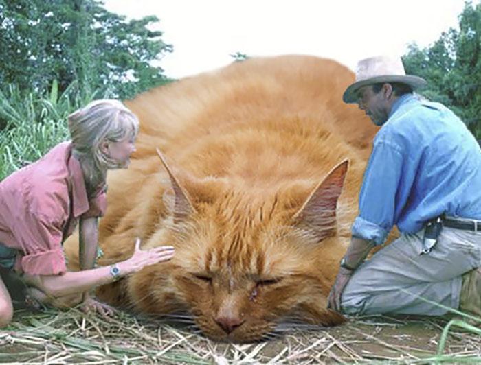 gato gigante dormido