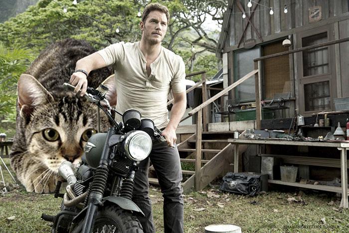 chris prat moto y atrás un gato gigante