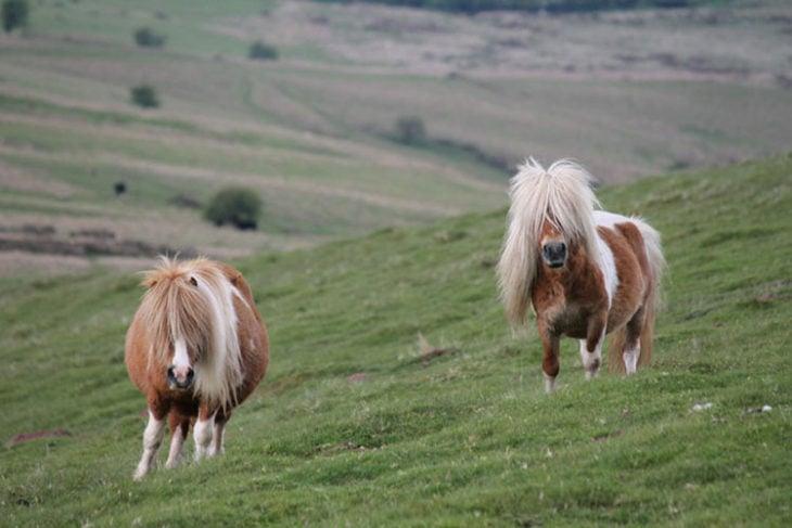 Ponys cabello liso