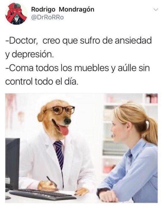 muerda los muebles memes doctor perro