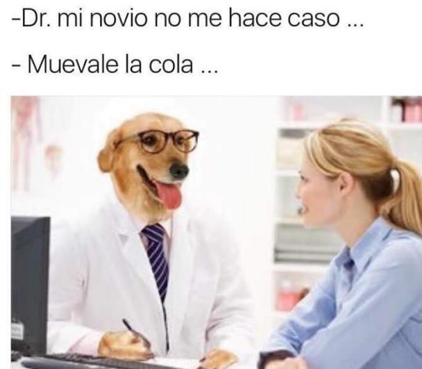 cola mover novio memes doctor perro
