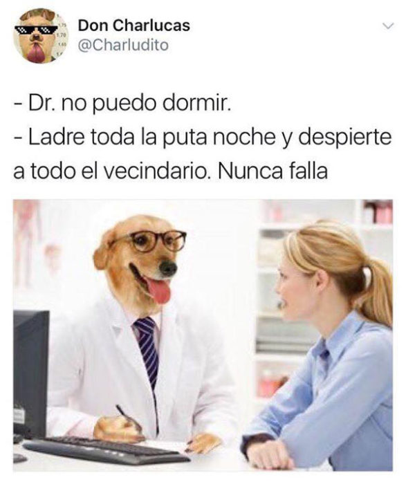 ladre toda la noche memes doctor perro