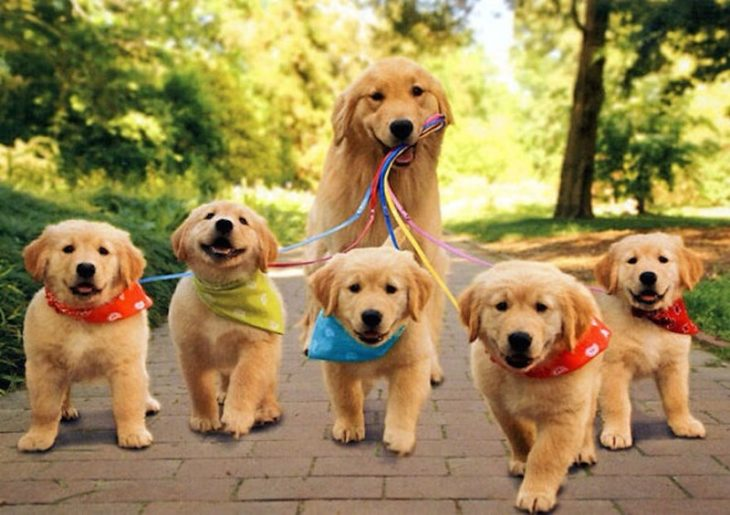 De paseo con los hijos
