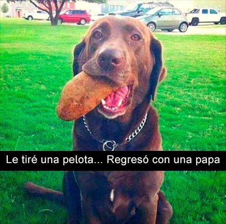 Perro con papa en el hocico