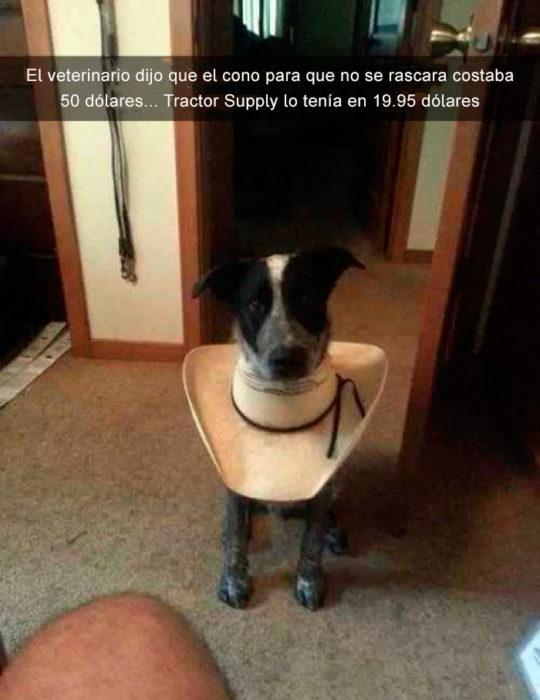 Perro con sombrero en el cuello
