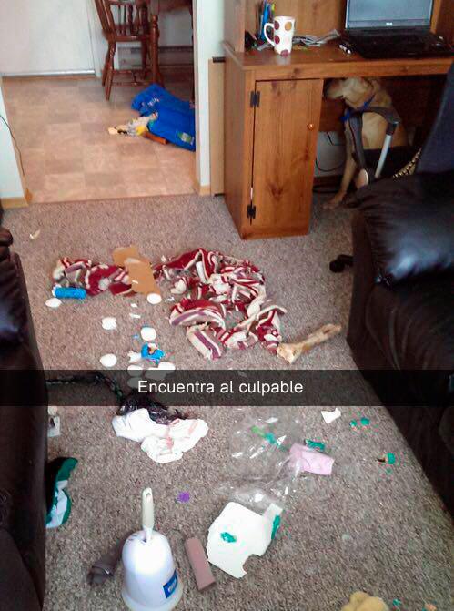Perro escondido dejó un tiradero