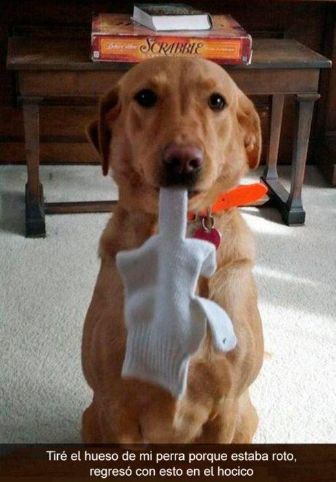 Perro con guante en el hocico