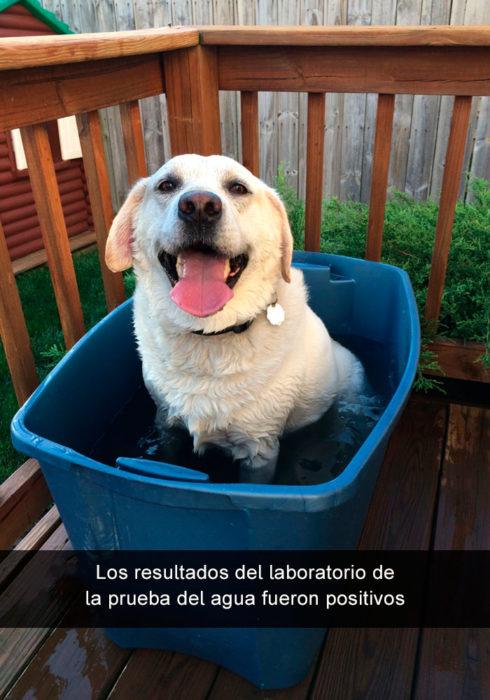 Perro en bote con agua