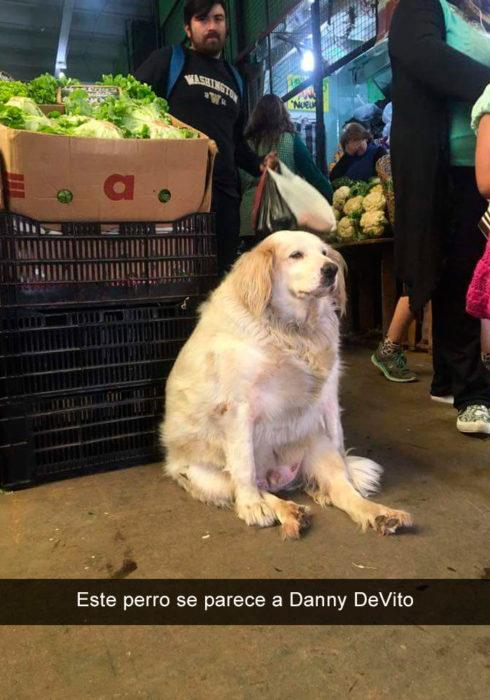 Perro gordo en el mercado