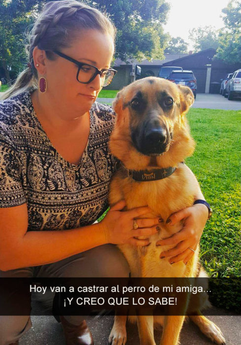 Perro pastor alemán va a ser castrado