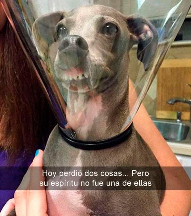 Perro con cono de la verguenza