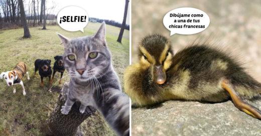 Cover animales con las mejores fotografías