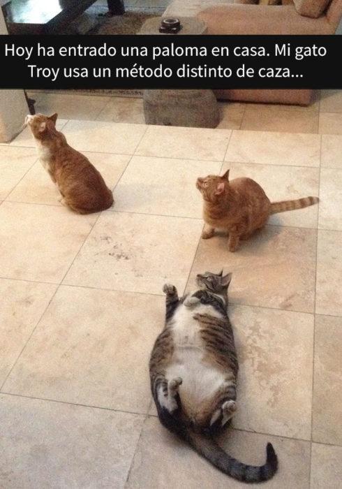 Tres gatos viendo algo