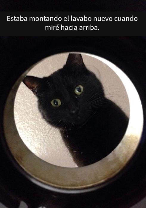 Gato viendo por un agujero