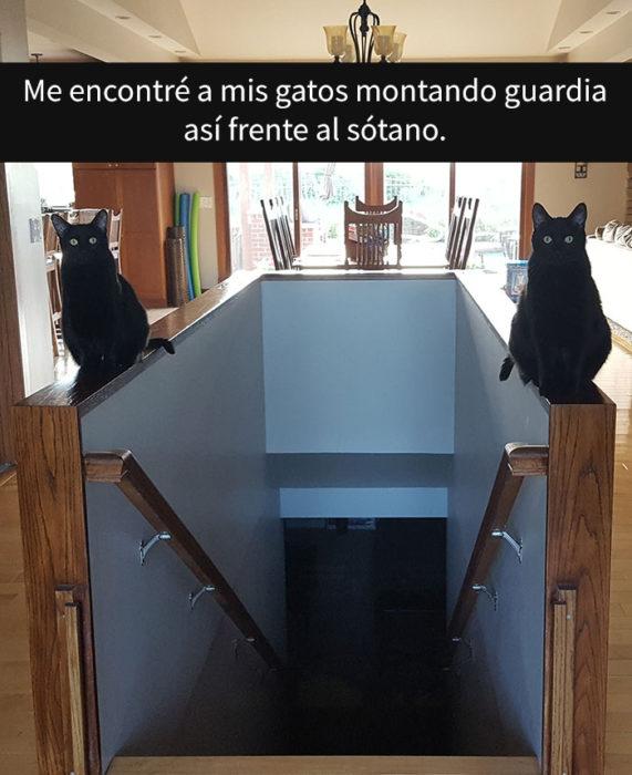 DOs gatos negros cuidando la entrada