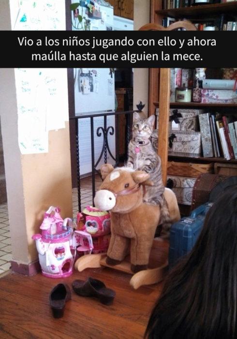 Gato sobre caballo de juguete