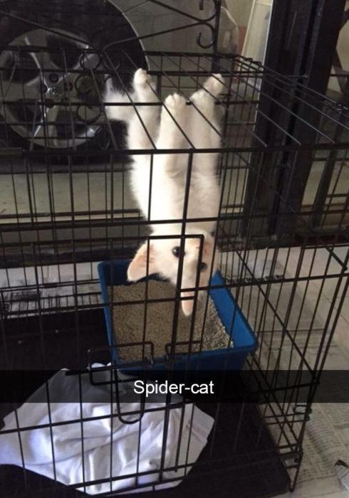 Gato de cabeza en su jaula