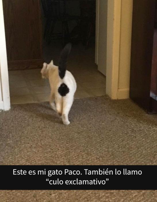 Gato con una mancha en el trasero