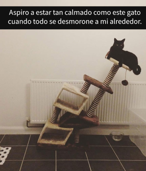 Gato a punto de caerse