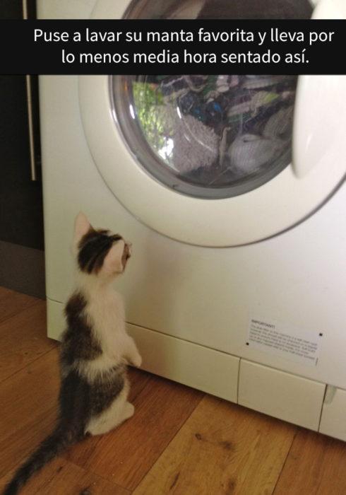Gato viendo la lavadora