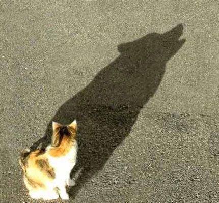 Gato sombra perro