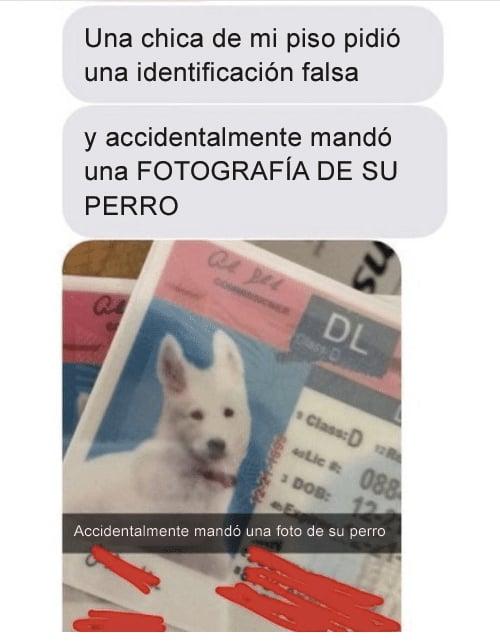 foto de perro en id