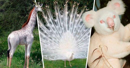 Cover Animales que no sabías que podían ser albinos