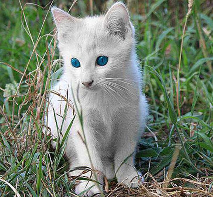 Cachorro de gato albino