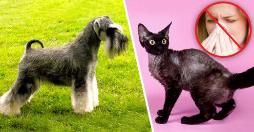 Cover Las 18 mascotas más seguras para los alérgicos