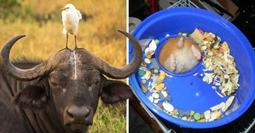 Cover Animales que se arrepintieron de sus decisiones