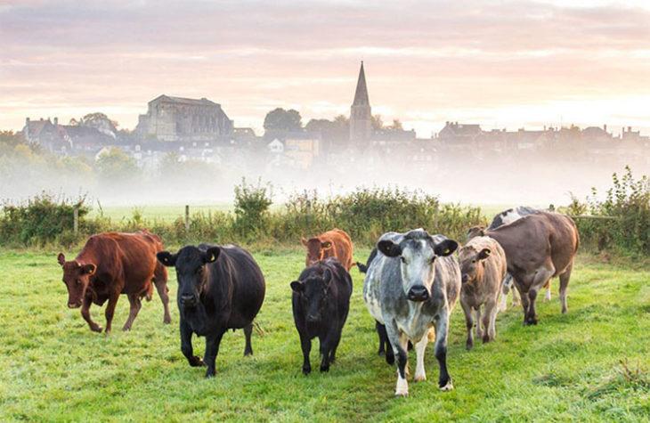 Grupo de vacas en un campo verde
