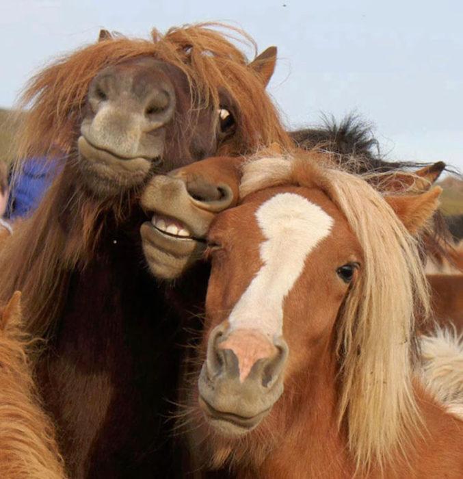 caballos juntos y relichando
