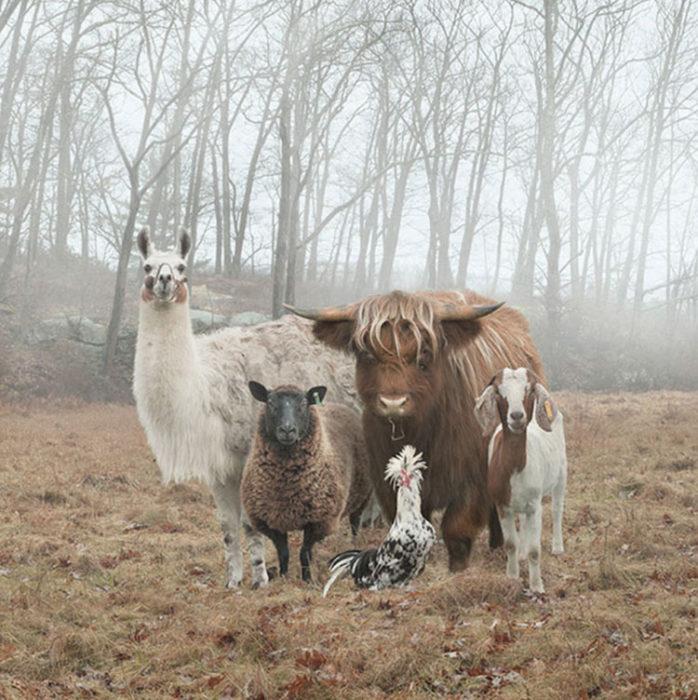 Un grupo de animales de granja reunidos