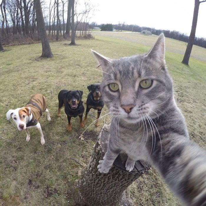 Gato toma la cámara en el momento en que fotografían a él y a unos perros