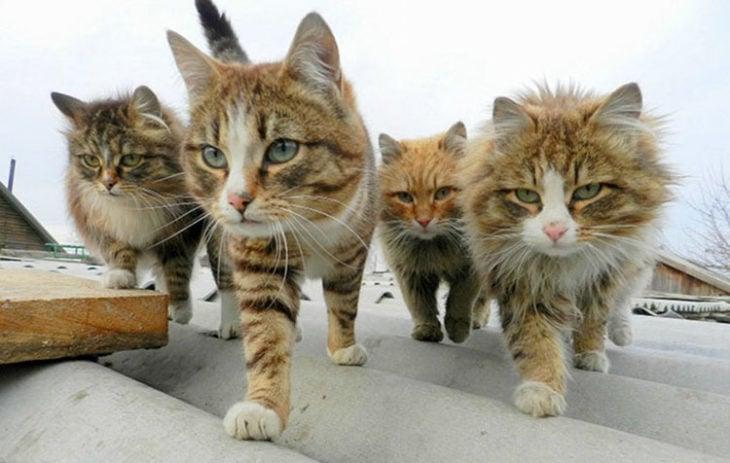un grupo de gatos caminando sobre el tejado