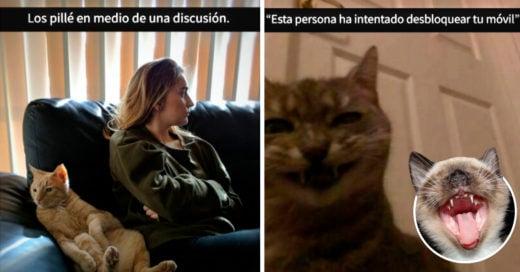 Cover Snaps de gatos con los que es imposible no reirse