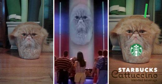 Cover Trolean a este pobre gato en Photoshop por meterse en un vaso