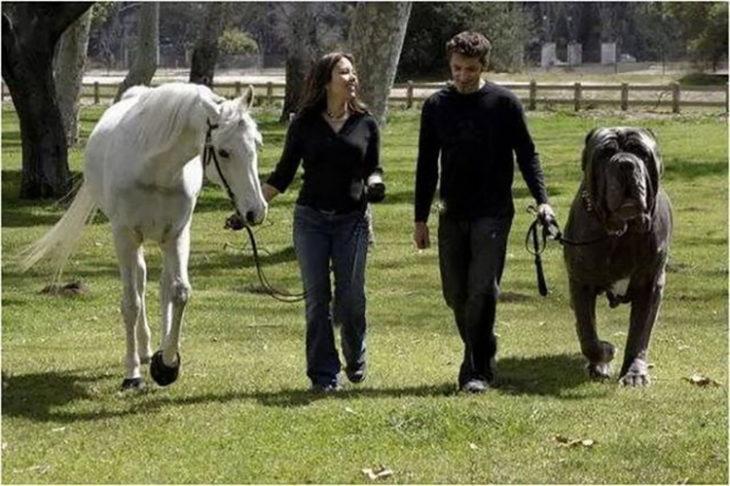 pareja paseando con un caballo y un gran perro de lado