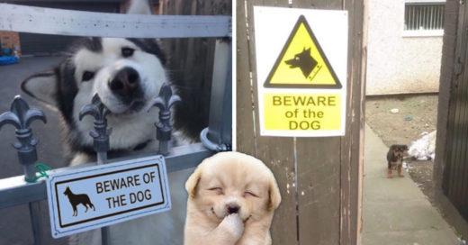 Cover Estos son los perros guardianes más tiernos de todos