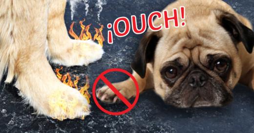 Cover CUIDADO: el calor puede destrozar las patitas de tu perro