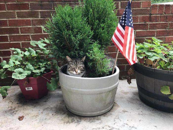 maceta badera gato